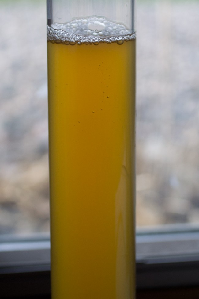 Wort Stability Sample